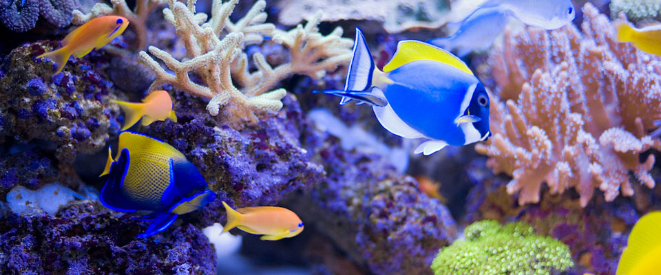 aqua marine   aquarium specialists in north london